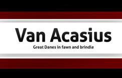 Acasius